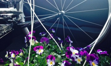 BikeWithFlowers_2